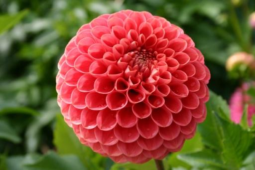 Flower (RGB image)